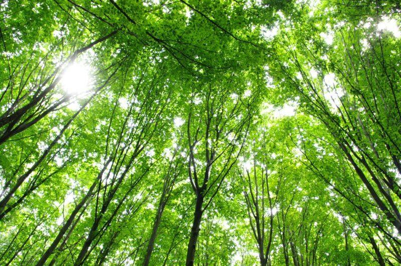 Emballage skov